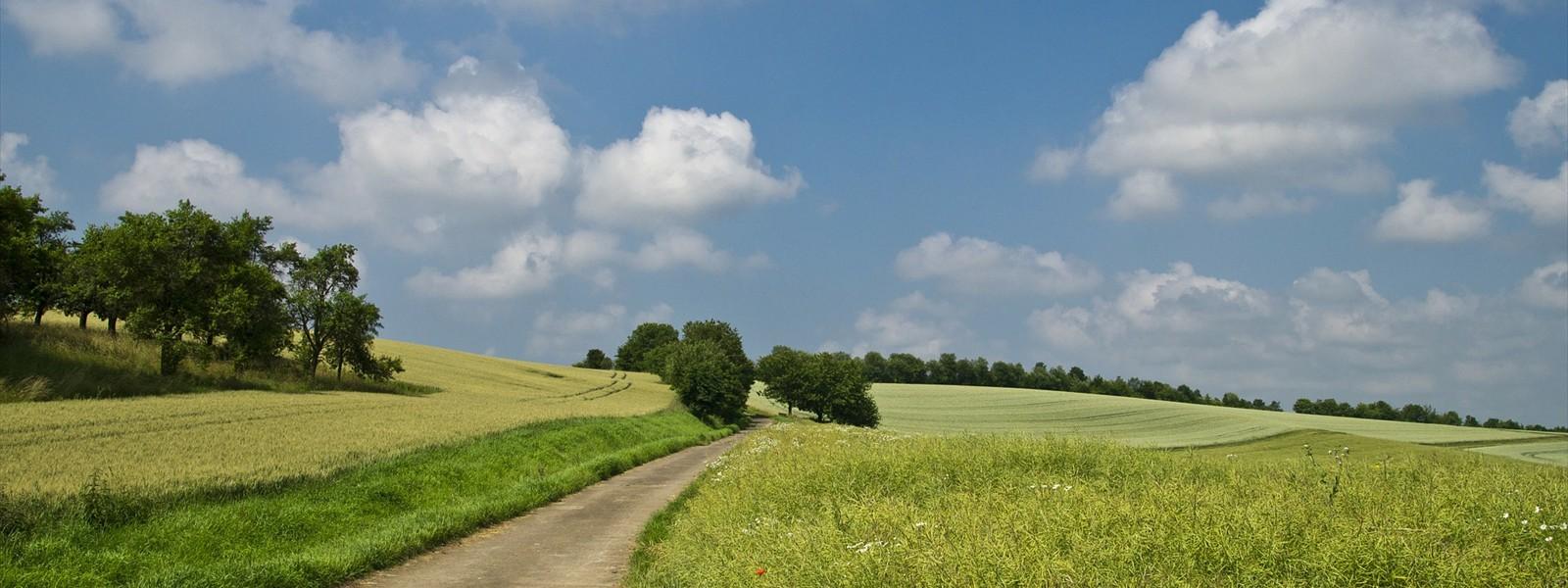 Summer Road :