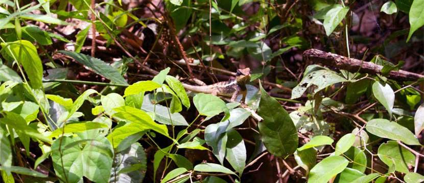 Hidden lizard